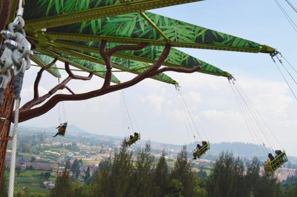 Fly up Jurassic Tree (2)